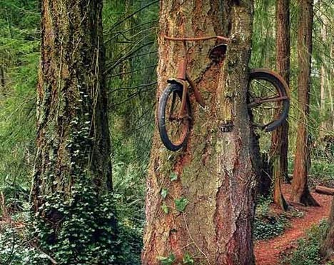 tree-grows-bike-small.jpg