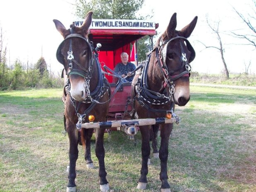 two-mules-and-a-cart.jpg