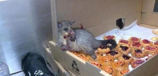 viral-opossum