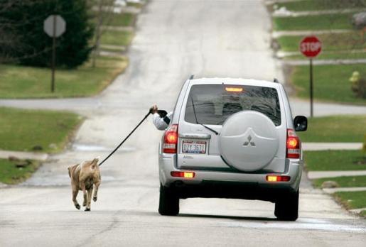 walking_dog_with_car.jpg