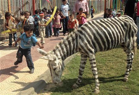zebra-painted-donkey.jpg